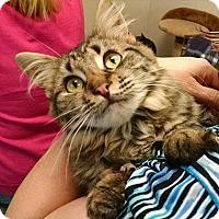 Adopt A Pet :: Farah - Orland, CA