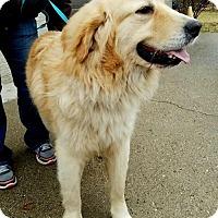 Adopt A Pet :: Phelps - Coldwater, MI