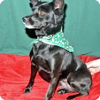 Adopt A Pet :: Mollie - East Sparta, OH