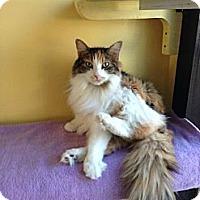 Adopt A Pet :: Cassy - Lancaster, MA