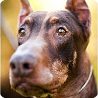 Adopt A Pet :: Harry - Santee, CA