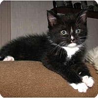 Adopt A Pet :: Buster - Oxford, NY