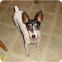 Adopt A Pet :: Jo - Leesport, PA