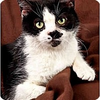 Adopt A Pet :: Ms. Puss - Owensboro, KY