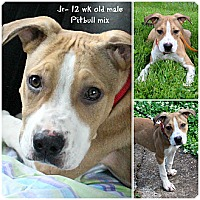 Adopt A Pet :: Jr - Evansville, IN