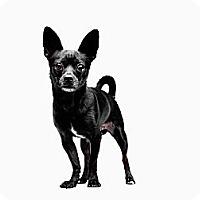 Adopt A Pet :: Franco - Santa Monica, CA