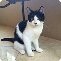 Adopt A Pet :: CUCUMBER - Higley, AZ