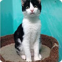 Adopt A Pet :: Jelly Bean - Newport Beach, CA