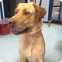 Adopt A Pet :: DJ - Van Nuys, CA
