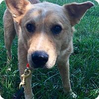 Adopt A Pet :: Buddy - Starkville, MS