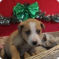 Adopt A Pet :: Allison - Waldorf, MD