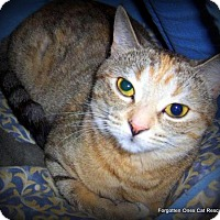Adopt A Pet :: Nelly - Richmond Hill, ON