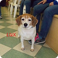 Adopt A Pet :: LUX - Ventnor City, NJ