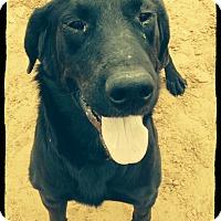 Adopt A Pet :: Monster - Old Saybrook, CT