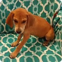 Adopt A Pet :: Bonnie - Trenton, NJ