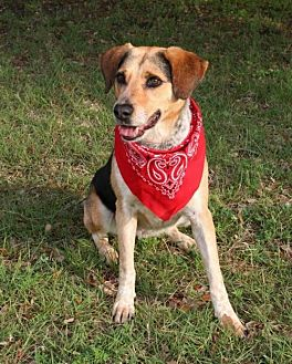 Hound (Unknown Type) Mix Dog for adoption in Austin, Texas - Ginnie