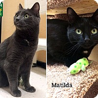 Adopt A Pet :: Nick & Matilda - Oakville, ON