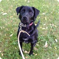 Adopt A Pet :: Blake - Kendall, NY