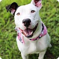 Adopt A Pet :: Baby - Lakeland, FL