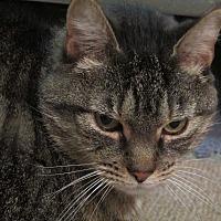 Adopt A Pet :: Adele - Plattekill, NY