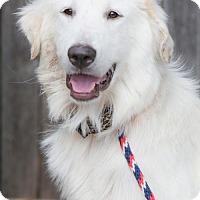 Adopt A Pet :: Kristeva - Plano, TX