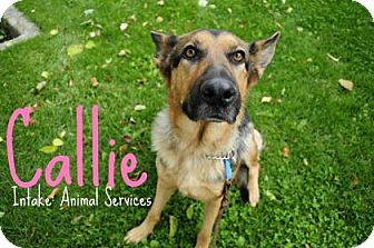 German Shepherd Dog Mix Dog for adoption in Hamilton, Ontario - Callie