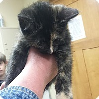 Adopt A Pet :: Brooklynne - Princeton, MN