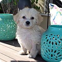 Adopt A Pet :: Jonesy - Los Angeles, CA