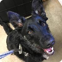 Adopt A Pet :: Vesper - Murphysboro, IL