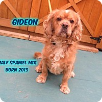 Adopt A Pet :: Gideon - Huddleston, VA
