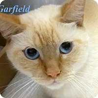 Adopt A Pet :: Garfield - El Cajon, CA