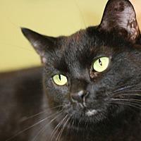 Adopt A Pet :: Odessa - Canoga Park, CA