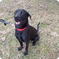 Adopt A Pet :: A010030 - Rosenberg, TX