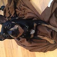Adopt A Pet :: Ralphael - Gilberts, IL