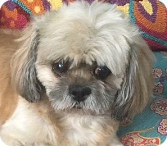 Small Dogs Adoption Miami Fl