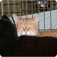 Adopt A Pet :: Jonesy - Lombard, IL