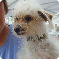 Adopt A Pet :: James - Long Beach, CA