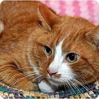Adopt A Pet :: Benjamin - Farmingdale, NY