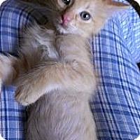 Adopt A Pet :: William - San Diego, CA