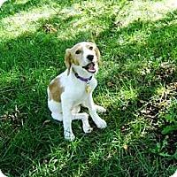 Adopt A Pet :: Toodle-oo - Novi, MI