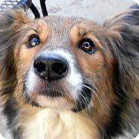Adopt A Pet :: Sheldon - Oakley, CA
