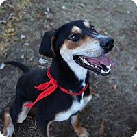 Adopt A Pet :: Zeke - Burleson, TX