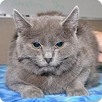Adopt A Pet :: Clancy - Medina, OH