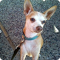 Adopt A Pet :: Rusty - Creston, CA