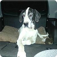 Adopt A Pet :: Saphirra - Austin, TX
