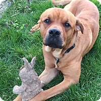 Adopt A Pet :: King - Cleveland, OH