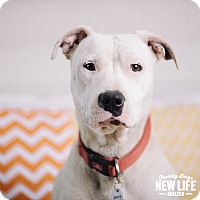 Adopt A Pet :: Dimples - Portland, OR