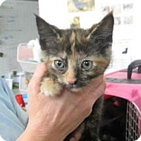 Adopt A Pet :: Harper - Belleville, MI
