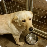 Adopt A Pet :: Glory - Lewisburg, TN