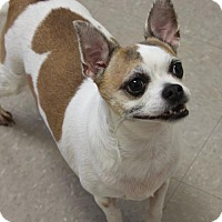 Adopt A Pet :: NIKKI - Clayton, NJ